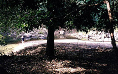 VJR camp site